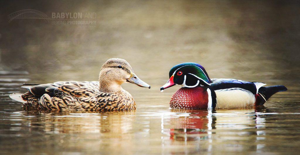Long Island Ducks Owner